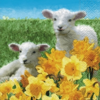 Lunch napkins Cute lambs