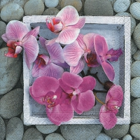 Lunch napkins Orchids in frame