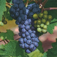 Lunch napkins Sweet grapes