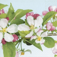 Napkins 33x33 cm - Apple Blossom
