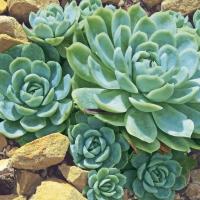 Servilletas 33x33 cm - Plantas del desierto