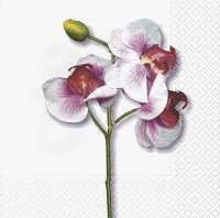 Servilletas Lunch Classic orchid white