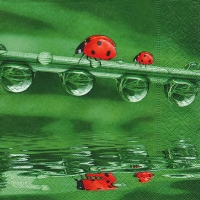 Lunch napkins Ladybugs on tour