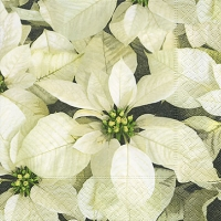 Serviettes lunch White poinsettias