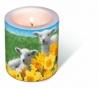 Bougies Candle Cute lambs