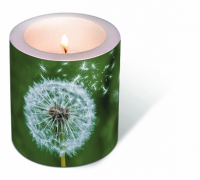 Candles Dandelion