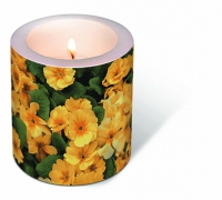 Bougies Candle Yellow prime roses