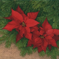 Lunch napkins poinsettia blossom