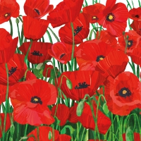 Cocktail napkins Red Poppies
