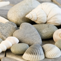 Lunch napkins Shells & Stones