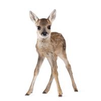 Lunch Servietten Cute Bambi