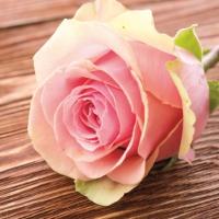 Lunch Servietten Rose Passion