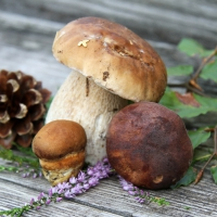 Lunch napkins Boletus Mix