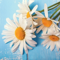 Lunch Servietten Daisies on Wood
