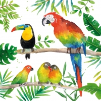 Serviettes lunch Tropical Birds