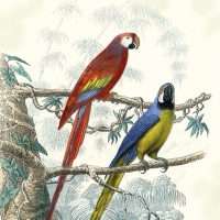 Serviettes lunch Antique Parrots