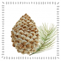 Serviettes cocktail  Pine Cone nature