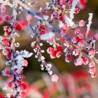 Lunch napkins Winter Berries