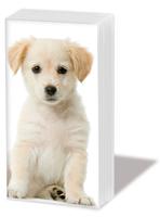 Taschentücher Puppy