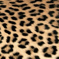 Lunch napkins Leopard Couture