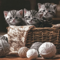Lunch napkins Striped Kittens