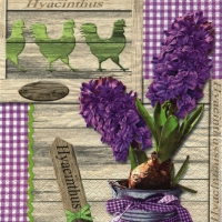 Lunch napkins Lilac Hyacinthus