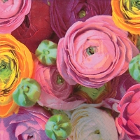 Lunch napkins Ranuculus