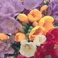 Lunch napkins Freesia
