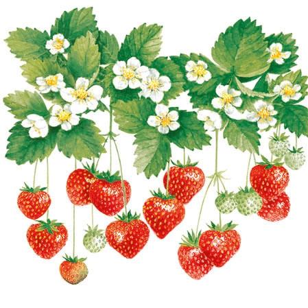 Ambiente,  Früchte - Erdbeeren,  Everyday,  cocktail servietten,  Erdbeeren