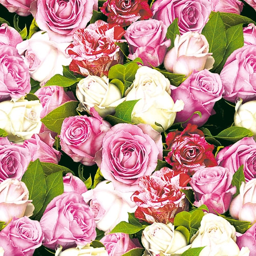 20 Servietten - 33 x 33 cm ROSES ALL OVER,  Blumen - Rosen,  Everyday,  lunchservietten