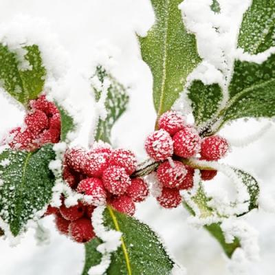 Lunch Servietten WINTER BERRIES,  Pflanzen - Ilex,  Weihnachten,  lunchservietten,  Schnee