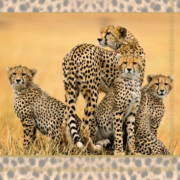 Lunch Servietten CHEETAH FAMILY,  Regionen - Afrika,  Regionen -  Sonstige,  Tiere -  Sonstige,  Everyday,  lunchservietten,  Leopard in der Savanne