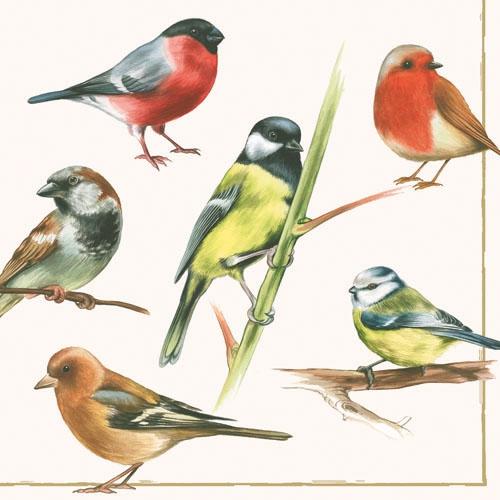 20 Servietten - 33 x 33 cm BIRDS,  Tiere - Vögel,  Everyday,  lunchservietten,  Buchfinken,  Spatzen,  Meisen,  Rotkelchen,  Gimpel,  Dompfaff