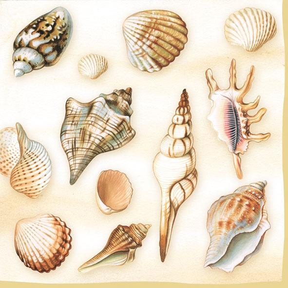 Lunch Servietten Shells cream,  Regionen - Strand / Meer - Muscheln,  Everyday,  lunchservietten