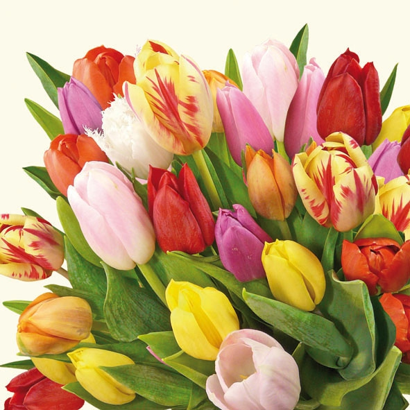 Lunch Servietten Colourful Tulips,  Blumen,  Blumen - Tulpen,  Blumen -  Sonstige,  Everyday,  lunchservietten