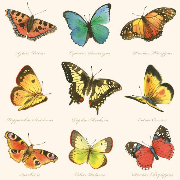 Lunch Servietten Collection of Butterflies cream,  Sonstiges - Schriften,  Tiere - Schmetterlinge,  Everyday,  lunchservietten