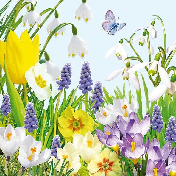 Lunch Servietten Spring Time,  Blumen - Tulpen,  Blumen -  Sonstige,  Blumen,  Everyday,  lunchservietten,  Blumen,  Tulpen,  Primeln