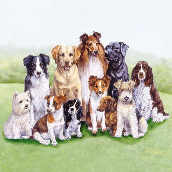 Lunch Servietten PEDIGREE DOGS,  Tiere - Hunde,  Everyday,  lunchservietten,  Hunde