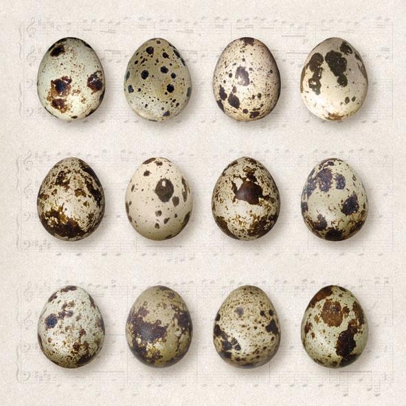 Lunch Servietten Quail Eggs