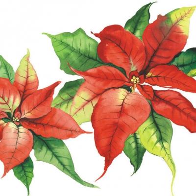 Servietten 33 x 33 cm,  Blumen - Weihnachtsstern,  Weihnachten,  lunchservietten,  Weihnachtsstern
