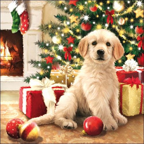 Lunch Servietten Waiting For Presents,  Tiere - Hunde,  Weihnachten - Geschenke,  Weihnachten - Weihnachtsbaum,  Weihnachten,  lunchservietten,  Hunde,  Weihnachtsbaum,  Kugeln