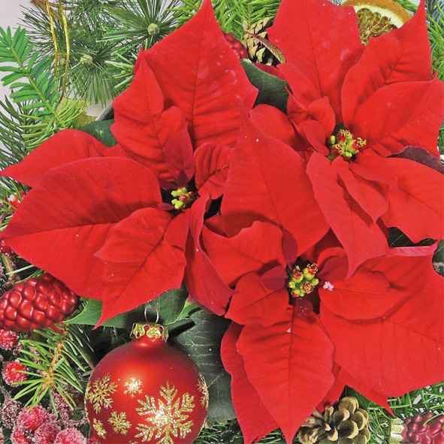 Servietten,  Weihnachten - Weihnachtsstern,  Weihnachten - Baumschmuck,  Weihnachten,  lunchservietten,  Weihnachtsstern,  Baumschmuck,  Kugeln