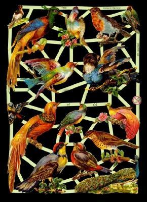 Glanzbilder exotische Vögel,Jugendtr.,  Glanzbilder,  Glanzbilder,  Vögel