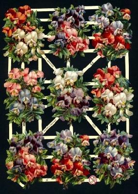 Glanzbilder 9 Wicken, Glanzbilder,  Glanzbilder,  Blumen
