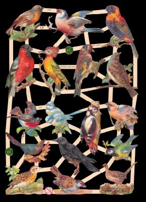 Glanzbilder Vögel,  Glanzbilder,  Tiere,  Vögel
