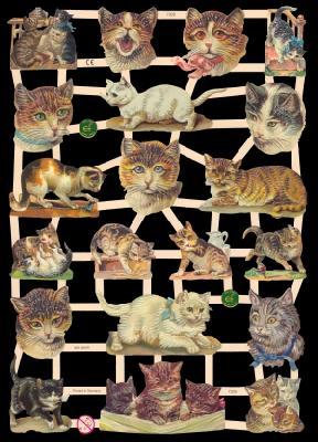 Glanzbilder Katzen,  Glanzbilder,  Glanzbilder,  Katzen