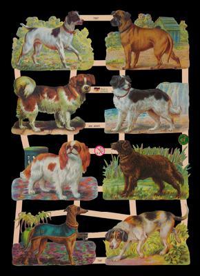Glanzbilder 8x Hunde,  Glanzbilder,  Tiere,  Hunde