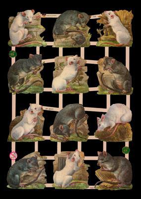 Glanzbilder Ratten /Mäuse,  Glanzbilder,  Tiere,  Ratten