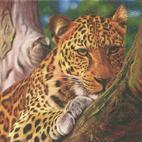Lunch Servietten Leopard,  Tiere - Tiger,  Regionen - Afrika,  Everyday,  lunchservietten,  Leopard