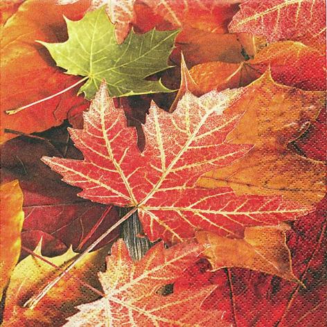 Everyday,  Herbst - Blätter / Laub,  Everyday,  lunchservietten,  Laub ,  Laubblätter,  Blätter